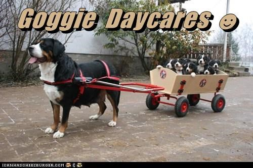 daycare dogs puppies wagon what breed - 6242697984