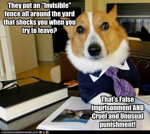 Lawyer Dog - 6242942976