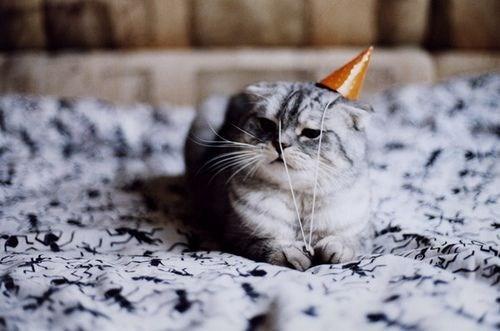 cat Cats Catuday cute animals Photo - 6243175424