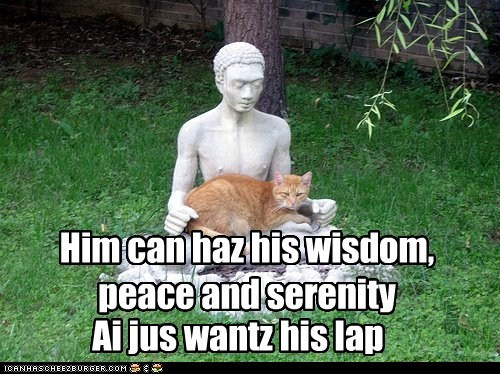 buddha budhism Cats Hall of Fame lap laps lolcats lotus meditate nirvana peace sit statues wisdom zen - 6243507200