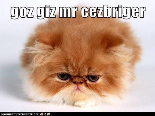 Cheezburger Image 6244527104