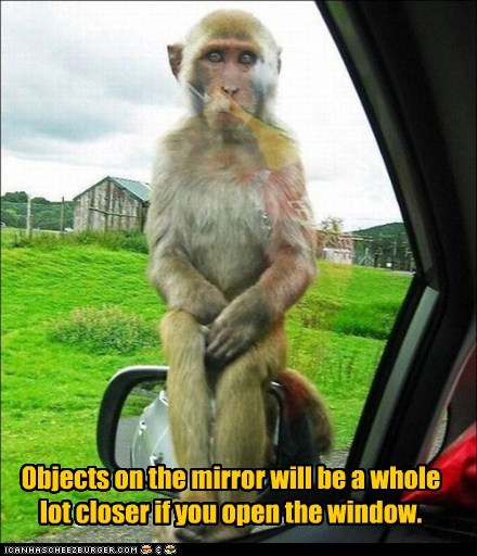 climbing,closer,monkey,objects in mirror,side mirror,sitting,warning,window
