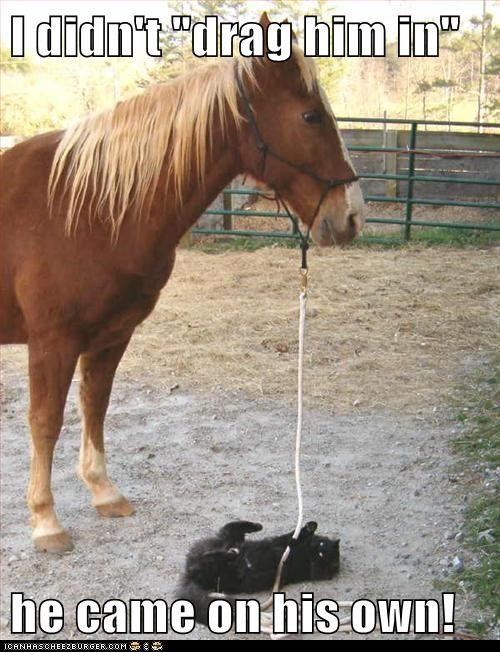 """I didn't """"drag him in"""" he came on his own!"""