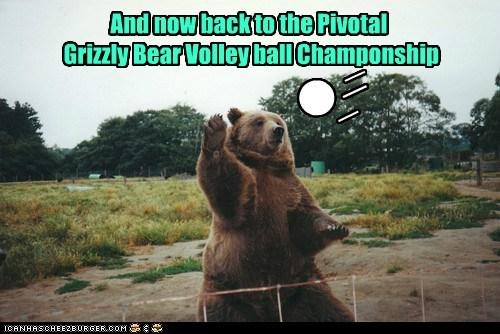 bear Championship net spike sports tournament volleyball - 6246298880