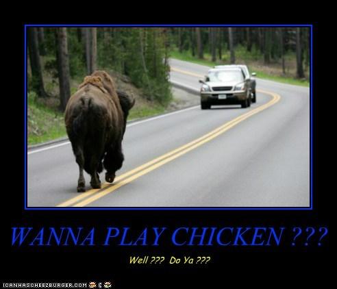 Cheezburger Image 6246832128