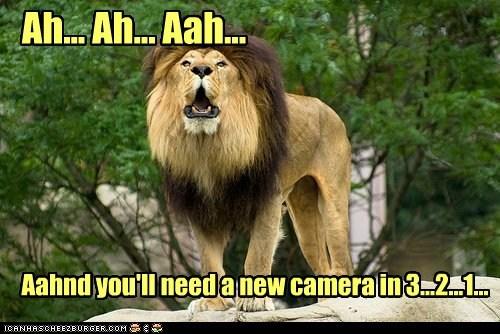 achoo camera lion messy ruined sneeze - 6247660032