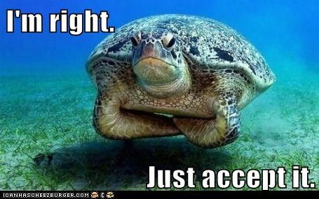 accept,Deal With It,im-right,ocean,right,sea turtles,tortoise,turtle,turtles