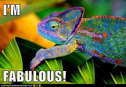 chameleons colorful colors fabulous gay iguana lizard lizards pride rainbow - 6248603136