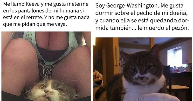 gatos verguenza publica