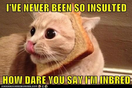 bread captions Cats inbred insult insulted lolcats pun puns rude