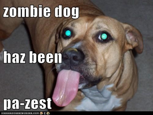Cheezburger Image 6249303296