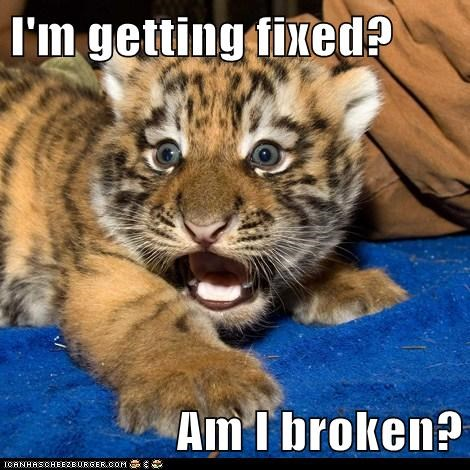 fixed surprised tiger cub - 6249336320
