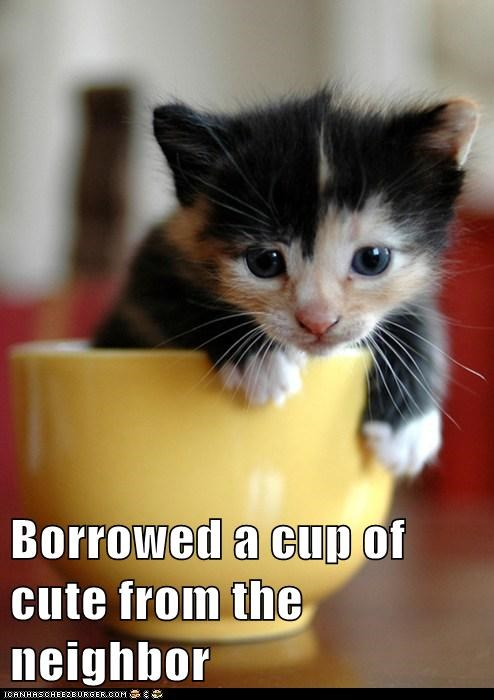 best of the week,borrow,cup,cup of sugar,cute,neighbor,sugar