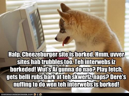 Cheezburger Image 6249397504