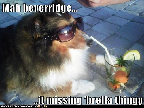 alcohol cocktail collie dogs drink fruity drinks summer sunglasses umbrella umbrellas