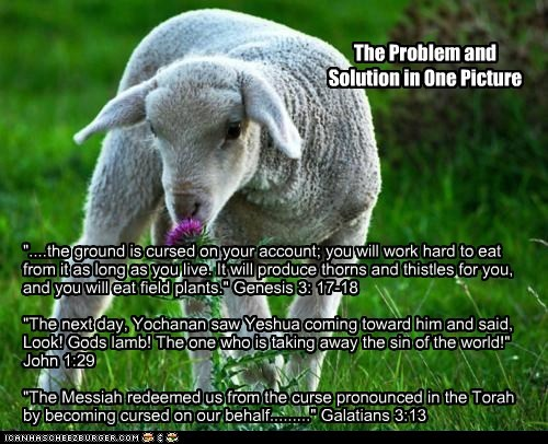 """The Problem and Solution in One Picture """"....the ground is cursed on your account; you will work hard to eat from it as long as you live. It will produce thorns and thistles for you, and you will eat field plants."""" Genesis 3: 17-18 """"The next day, Yochanan saw Yeshua coming toward him and said, Look! Gods lamb! The one who is taking away the sin of the world!"""" John 1:29 """"The Messiah redeemed us from the curse pronounced in the Torah by becoming cursed on our behalf........."""" Galatians 3:13"""
