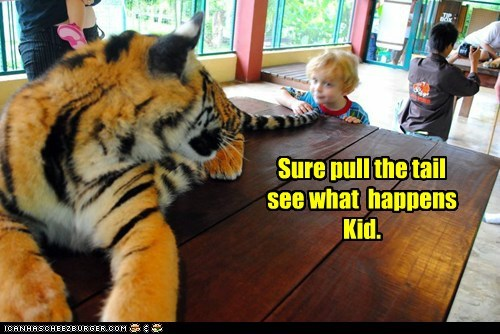 i dare you,kid,pulling,see what happens,tail,threat,tiger