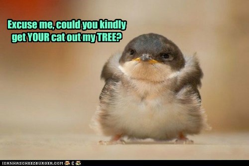bird chickadee feathers - 6249546752