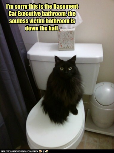 basement cat,bathroom,business,executive,soul,toilet,victim