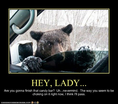 bear,car,snow,trees,window