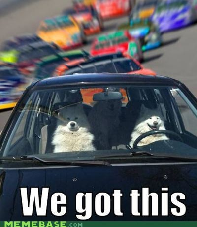 dogs,Memes,race,we got this