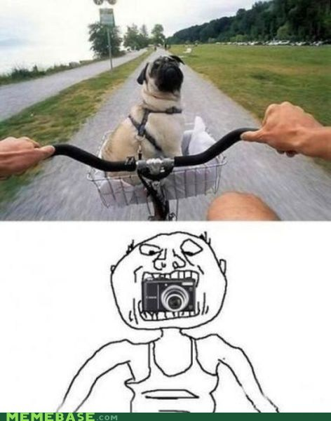 bike dogs Memes picture safety - 6250016768