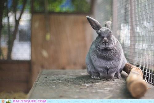 Bunday bunny happy bunday rabbit stick - 6250136320
