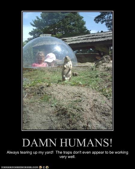 annoying gopher humans kids role reversal tearing apart traps yard - 6250160896