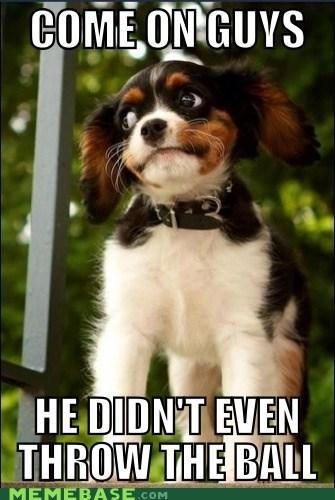 ball dogs Memes throw - 6250256128