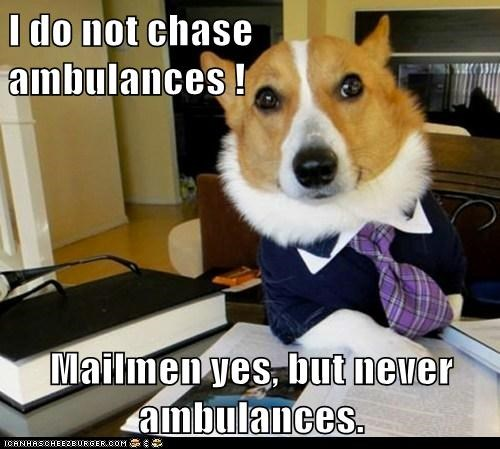 ambulance,chasing,corgis,dogs,Lawyer Dog,Lawyers,mailmen,Memes