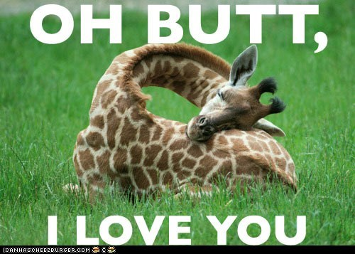 butts giraffes i love you love