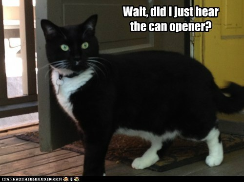 Wait, did I just hear the can opener?