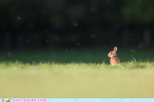 bunny,field,grass,meadow,sunshine