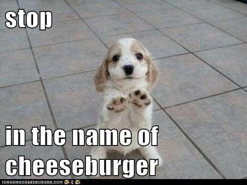 Cheezburger Image 6250812160