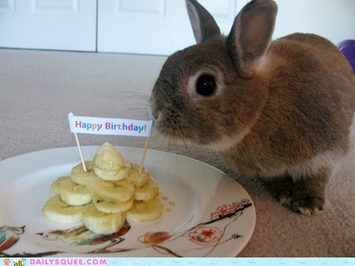 banana birthday bunny happy bunday pet reader squee - 6250916096