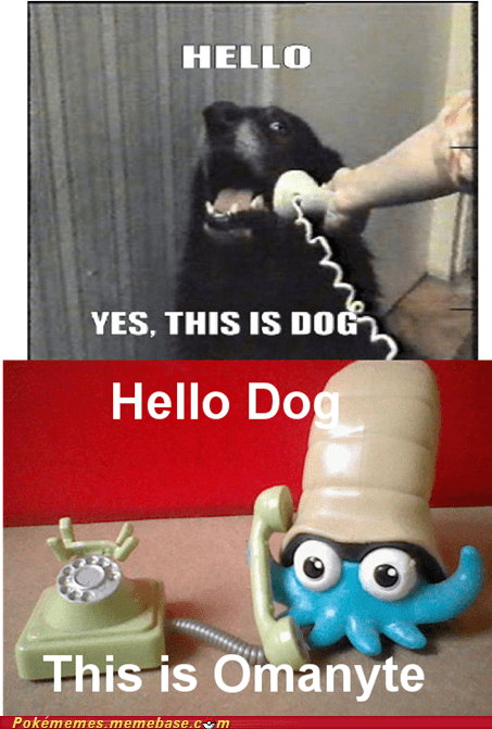 dogs meme omanyte weather