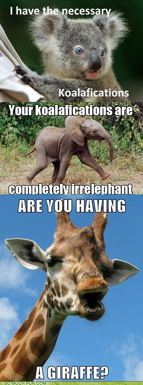 animals conversation elephant giraffes Hall of Fame koala literalism similar sounding