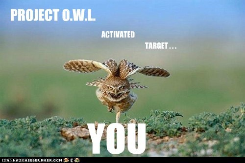 danger,Owl,project,scary,Target,weapon,you