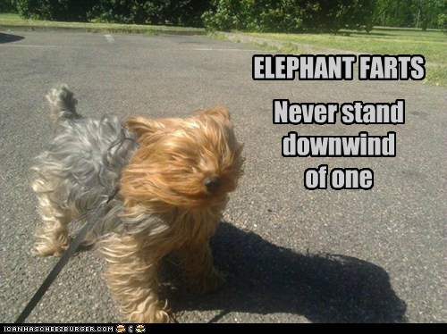 advice dogs farts wind yorkie