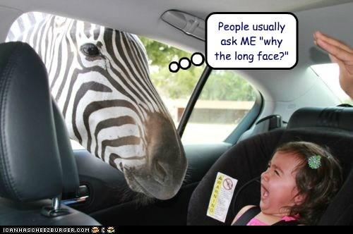 car crying horse joke kid long face old joke pun scared zebra - 6251639808