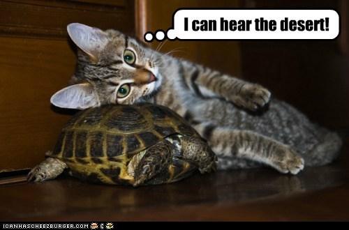 desert,hear,listen,ocean,shell,tortoise