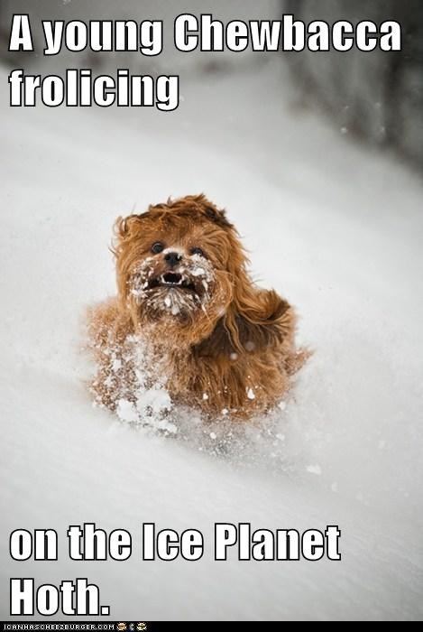 best of the week,chewbacca,dogs,frolicking,Hall of Fame,Hoth,snow,star wars,what breed