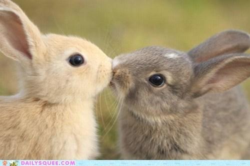 bunnies happy bunday KISS whiskers - 6251966720