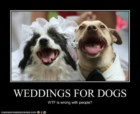 WEDDINGS FOR DOGS WTF is wrong with people?