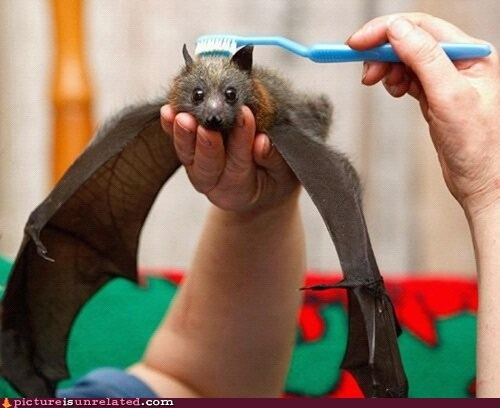 bat cute teeth toothbrush wtf