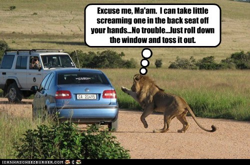 car,charity,eating kids,lion,no trouble,offer,screaming,toss