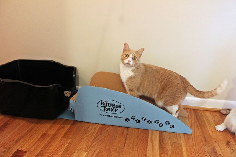 disabled cats litre box kitty brilliant Cats senior cats solution - 6252549