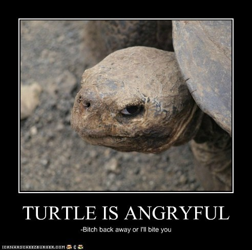TURTLE IS ANGRYFUL -Bitch back away or I'll bite you