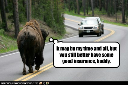 buffalo car insurance road