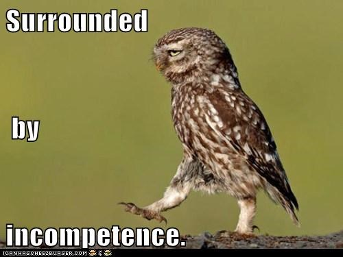 annoyed best of the week eye roll Hall of Fame idiots incompetence Owl owls surrounded - 6252710144